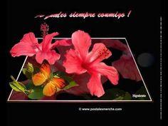Videos de Saludos Postales de Saludos Tarjetas de Saludos desde www.postalesmerche.com.flv - YouTube