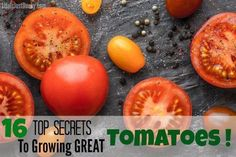 Whether on your homestead or just your back yard garden, everyone wants to grow tomatoes like a pro. Here are 16 secrets for growing great tomatoes. Make this years gardening adventure the most rewarding yet!