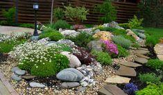 blühende Pflanzenarten für den Steingarten auswählen