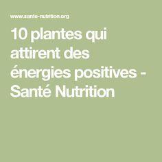 10 plantes qui attirent des énergies positives - Santé Nutrition