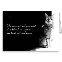 Sympathy card for the loss of a beloved pet cat