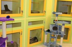Catsville Condos Designed specifically with felines in mind, these bi-level condos let your kitty climb and explore or relax and take a catnap. Holistic Select dry cat food, plus litter and bedding are provided.