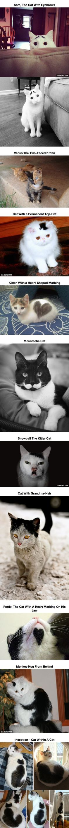 10 Cats That Got Famous For Their Awesome Fur Markings. I'm not a cat person, but I was crying...snowball the kitler cat...