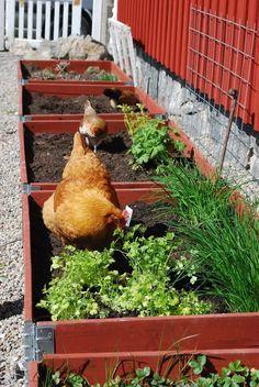 Trädgårdsliv!