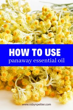 Need ideas for how to use PanAway essential oil blend? This post will give you a bunch of ideas of how to use it plus tell you the benefits of the oils that make up PanAway. You'll love having this info on hand! #essentialoils Panaway Essential Oil, Natural Essential Oils, Young Living Essential Oils, Essential Oil Blends, Natural Oils, Natural Living, Being Used, Essentials, Ideas