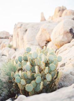 {lanielias} Cacti in the desert