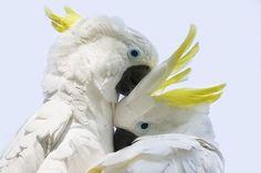 Cómo combatir el picaje de las aves blog.theyellowpet.es