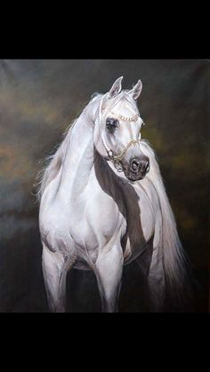 Judi Kent Pyrah Best Equestrian Artist British Horse Painter equine paintings of Hunting Scenes and Arab Horses Arabian Art Gallery Scarborough North Yorkshire Beautiful Arabian Horses, Pretty Horses, Arabic Horse, Arabian Stallions, Arabian Art, Horse Artwork, Horse Drawings, White Horses, Equine Art