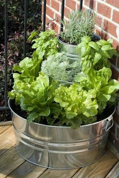 Easy salad garden!
