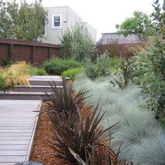Phormiums (flax plants) with tufted bluegrass plants...idea for garden bed in…