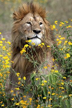 Le roi de la foret aime les fleurs