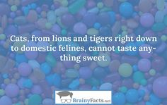 Animal Facts : Sweet things | did you know