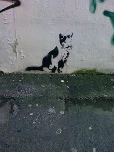queridos gatos: Graffitis
