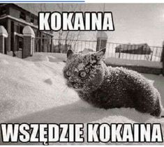 Inspiring image cat, cocaine, funny, kitty, lol - Resolution - Find the image to your taste Wtf Funny, Funny Cats, Hilarious, Funny Images, Funny Pictures, Image Cat, Man Humor, Best Memes, Cat Art