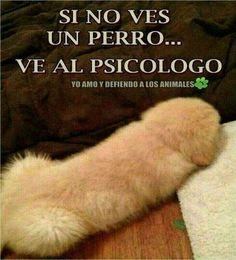 Si no ves un perro en la foto, necesitas un #Psicologo. #Humor