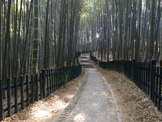 Bamboo Forest Running Railroad Tracks, Bamboo, Sidewalk, Running, Keep Running, Why I Run, Jogging, Pavement, Curb Appeal