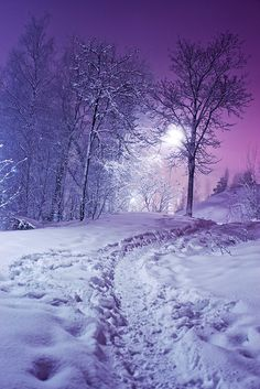 Snow at Night!  This photo reminds me so much of my childhood in Jasper, Alberta. It was magic to walk to Midnight Mass, through the woods!