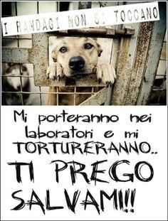 l'Italia aveva promesso che mai e poi mai si sarebbe sperimentato su cani e gatti randagi. Ma non è andata così. !  Firmiamo qui sotto per fermare qiesta legge!!  Grazie di cuore   http://www.lav.it/cosa-puoi-fare-tu/aderisci-alla-protesta