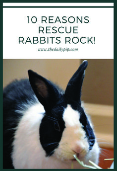 10 reasons rescue rabbits rock, bunny basics, adopt rabbits