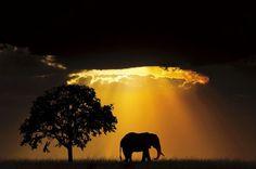 Concurso de fotografía nos presenta lo más lindo del reino animal | Planeta CuriosoConcurso de fotografía nos presenta lo más lindo del reino animal – Planeta Curioso