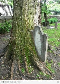 Tombstone out of a tree.-life-goes-tree-growing-over-tombstone. Old Cemeteries, Graveyards, Cemetery Art, Life Goes On, Abandoned Places, Mother Nature, Creepy, Scenery, Earth