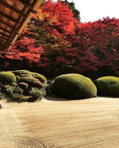 #Kyoto#japan