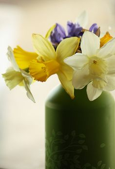 Daffodils in the Window by beegardener