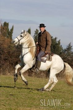 horses and ponies - Google Search