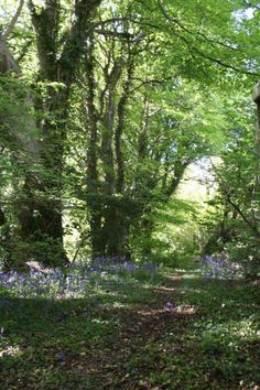Accommodation, Ramsey, Isle of Man. Private Woodland, Ballavilley.