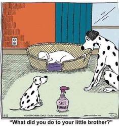 Funny Animal Memes, Dog Memes, Funny Dogs, Funny Animals, Animal Humor, Dog Quotes, Animal Quotes, Dog Rooms, Dog Behavior