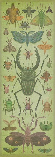 """The biophilia hypothesis suggests that there is an instinctive bond between human beings and other living systems.The term """"biophilia"""" literally means """"love of life or living systems. Illustration Botanique, Botanical Illustration, Art And Illustration, Nature Illustrations, Historia Natural, Bug Art, Insect Art, Bugs And Insects, Botanical Prints"""
