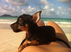 Ralph Lauren beaching it in Kailua
