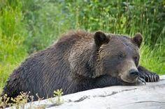 Alaska wildlife - Bing images