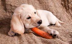 Gesundheit mit Gemüse für Hund und Katze -> https://www.zentrum-der-gesundheit.de/gemuese-fuer-hunde-katzen-ia.html #gesundheit