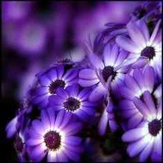 ~~ purple flowers ~~