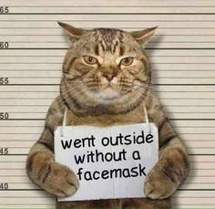 Funny Animal Memes, Cute Funny Animals, Funny Cute, Cute Cats, Funny Memes, Funny Humour, Super Funny, Cat Shaming, Animal Humor