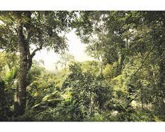 Fototapete Vlies Dschungel 368 x 248 cm bei HORNBACH kaufen