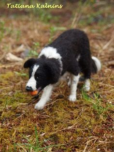 Needle felted border collie - 10cm high - FeltedPaws by Tatiana