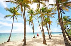 plage club med guadeloupe