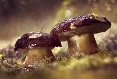 Mushrooms in the rain on a sunny day - Mushrooms in the rain on a sunny day