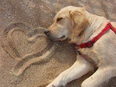 Sleepy dog! Love!