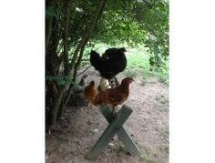 Diy Chicken Toys, Chicken Treats, Chicken Roost, Peanut Butter Jar, Chicken Coup, Raising Backyard Chickens, Pet Supply Stores, Bird Toys, Easy Diy Projects