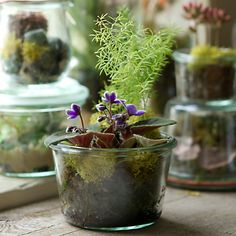 Perfect for potting these little guys!