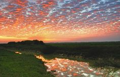 Llanos Venezolanos