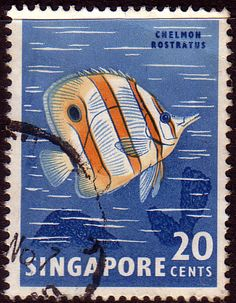 Singapore 1962 Butterfly Fish Fine Used                    SG 71 Scott 58    Other Asian and British Commonwealth Stamps HERE!