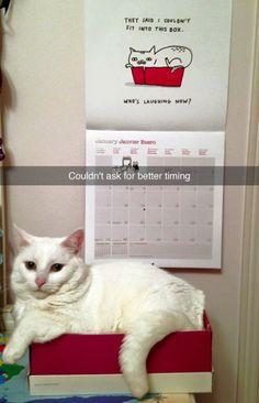 Who's laughing meow? (photo via cat_vlaslov)