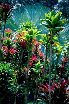 http://cdn.c.photoshelter.com/img-get/I0000ufUsRtAGbsk/s/860/860/Hawaiian-Tropical-Gardens-MG-0893.jpg