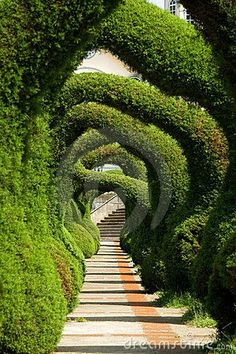 walking thru this must be wonderful - hope the stairs lead to some place worthy of this path