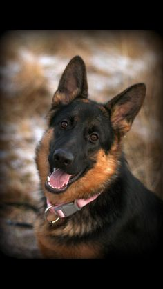 Handsome #GSD
