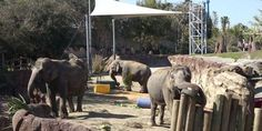 petitie: BUSCH GARDENS-TAMPA, RELEASE YOUR SIX ELEPHANTS TO SANCTUARY! NO MORE ZOO'S!